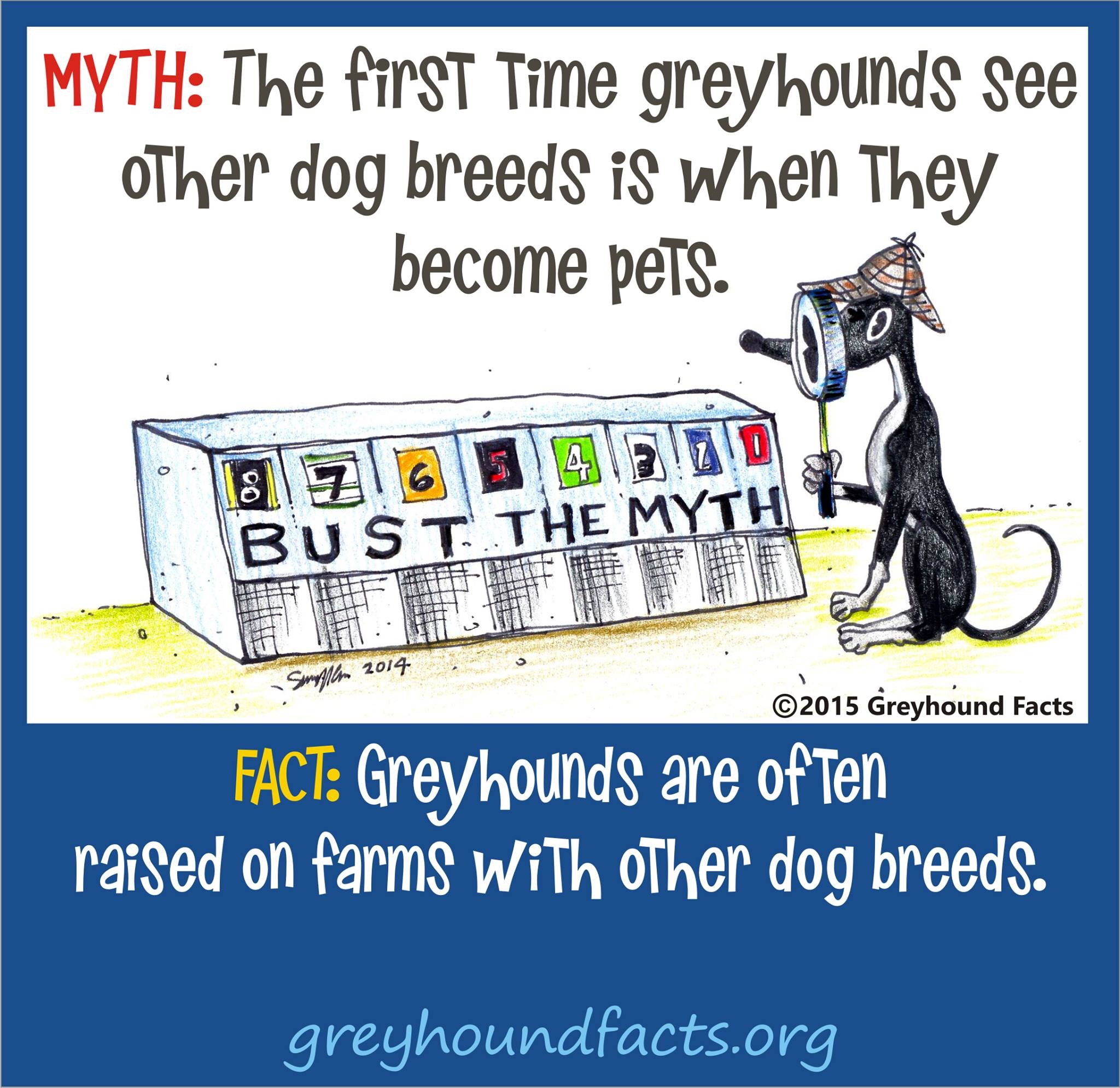 Myths Busted – Greyhound Facts