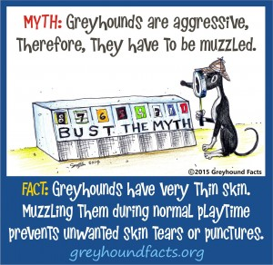 Muzzle myth