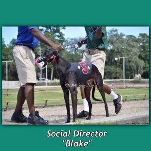 social director blake