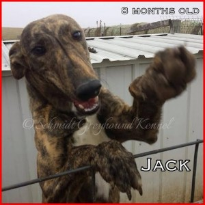 Jack 1-16-2015