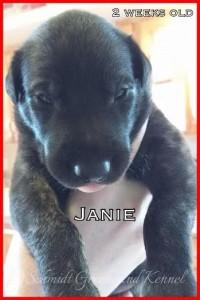 Janie 2 weeks old