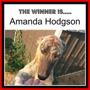 Amanda H Pup