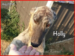 Holly Aug 2014